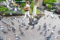 Las palomas. Tlaquepaque, Mexico. Photo by Rocio Guenther